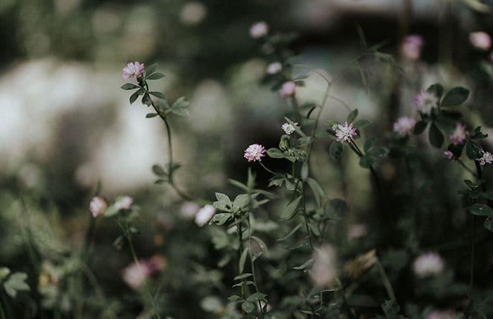 BlumenRosa-Garten-BelleMartha