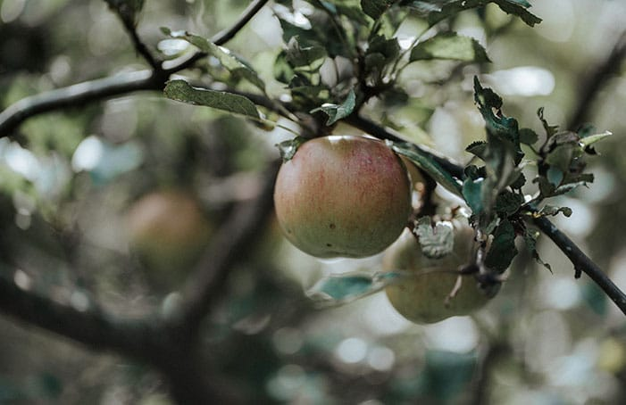 Apfel-Garten-BelleMartha