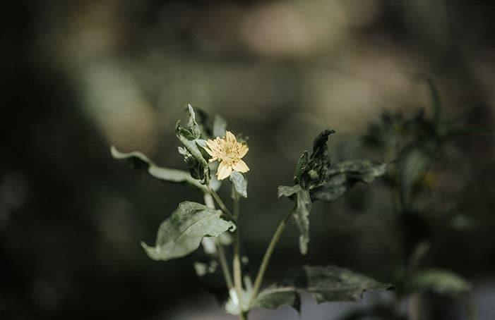 BlumeGelb-Garten-BelleMartha